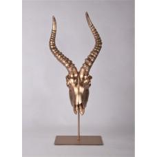 Antilope skull